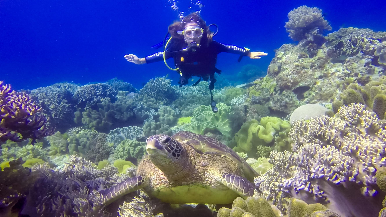 Apo Island ∙ Schnorcheln und Tauchen auf der Schildkröteninsel ∙ Philippinen