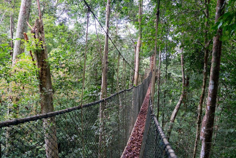 Taman Negara – Dschungelabenteuer pur