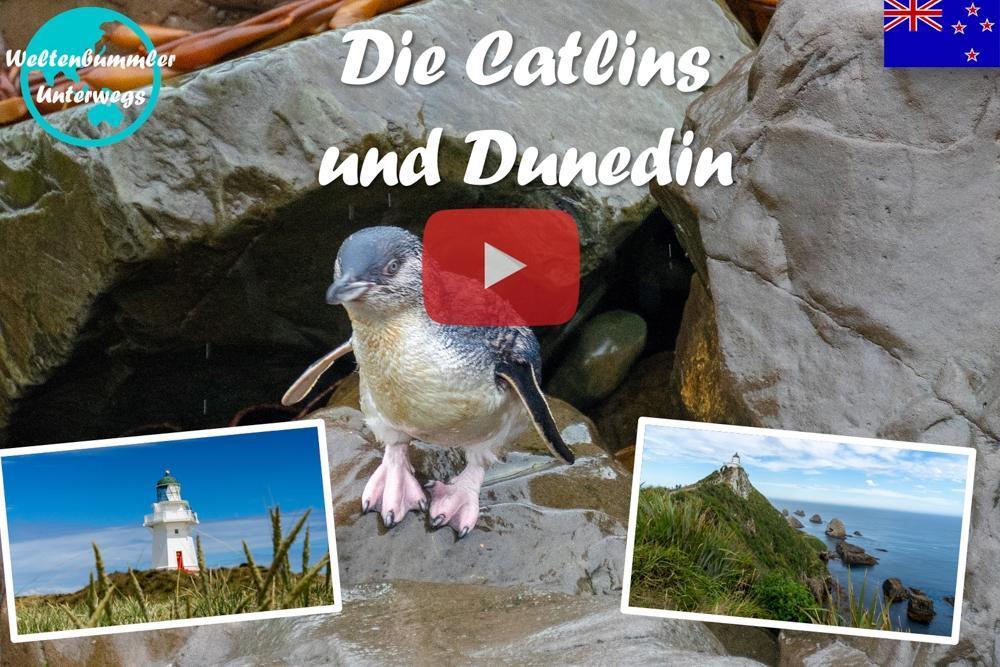 Weltreise Vlog #55: Catlins ∙ Delfine, Seelöwen und Pinguine