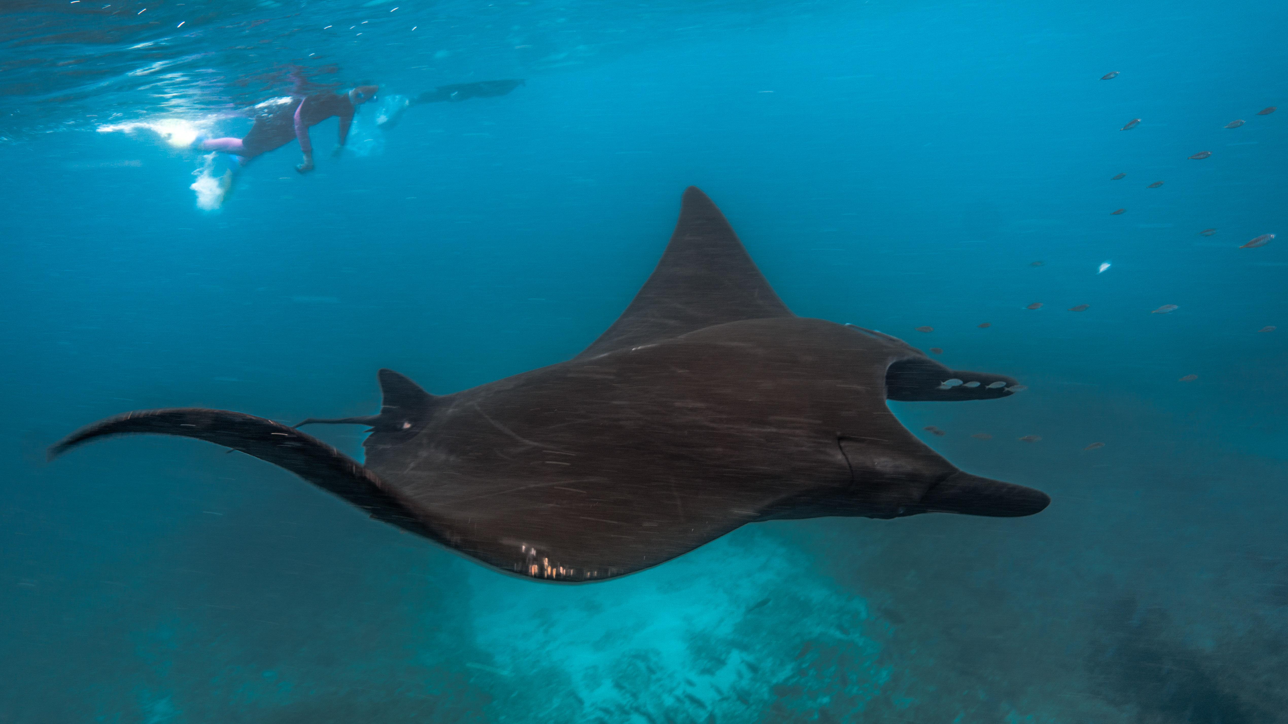 Coral Bay: Schwimmen mit den Mantas im Ningaloo Reef