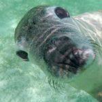 Neugierige Seelöwen & Kängurus – Jurien Bay, Caversham und der Wave Rock