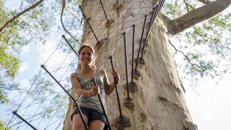 Die riesigen Karribäume von Pemberton & Stachelrochen in der Hamelin Bay