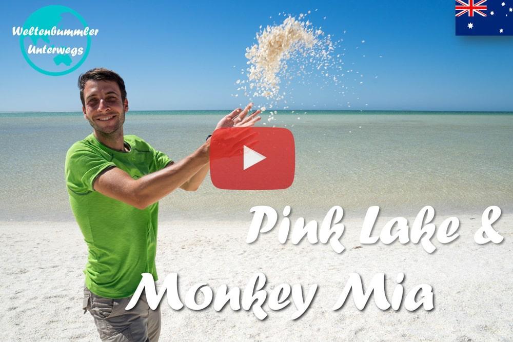 Weltreise Vlog #33: Pink Lake & Monkey Mia ∙ Von Muschelstränden und Delfinen