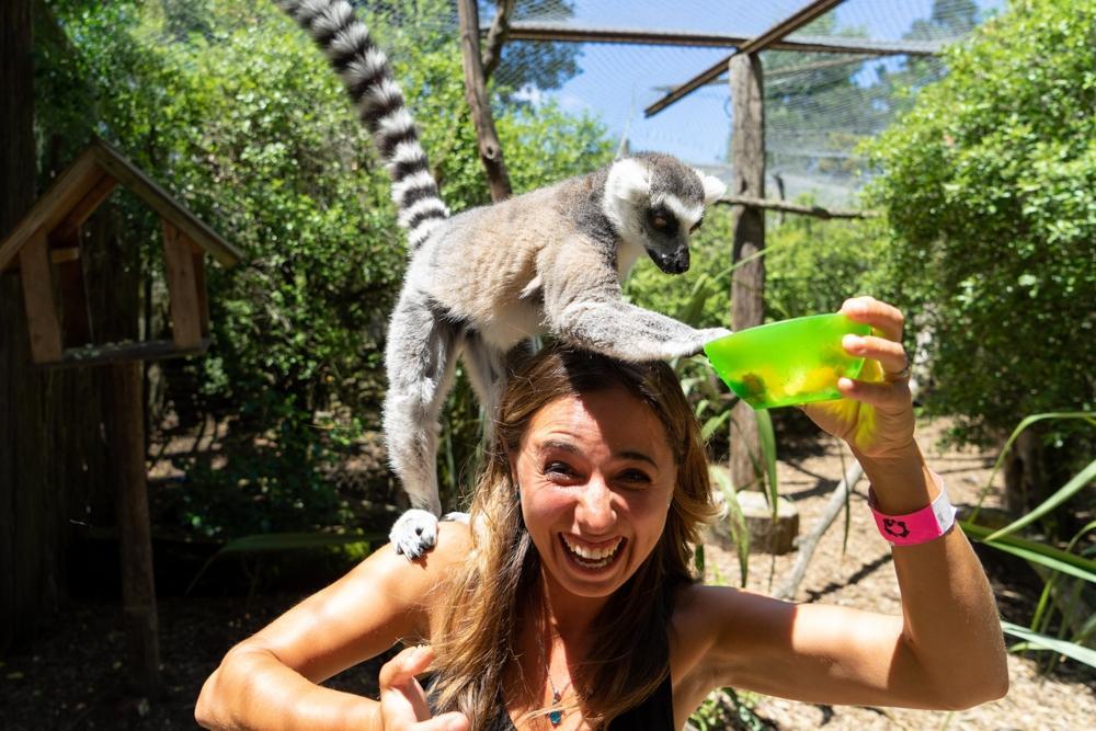 Christchurch – Unsere letzten Tage mit Kiwis und Lemuren in Neuseeland