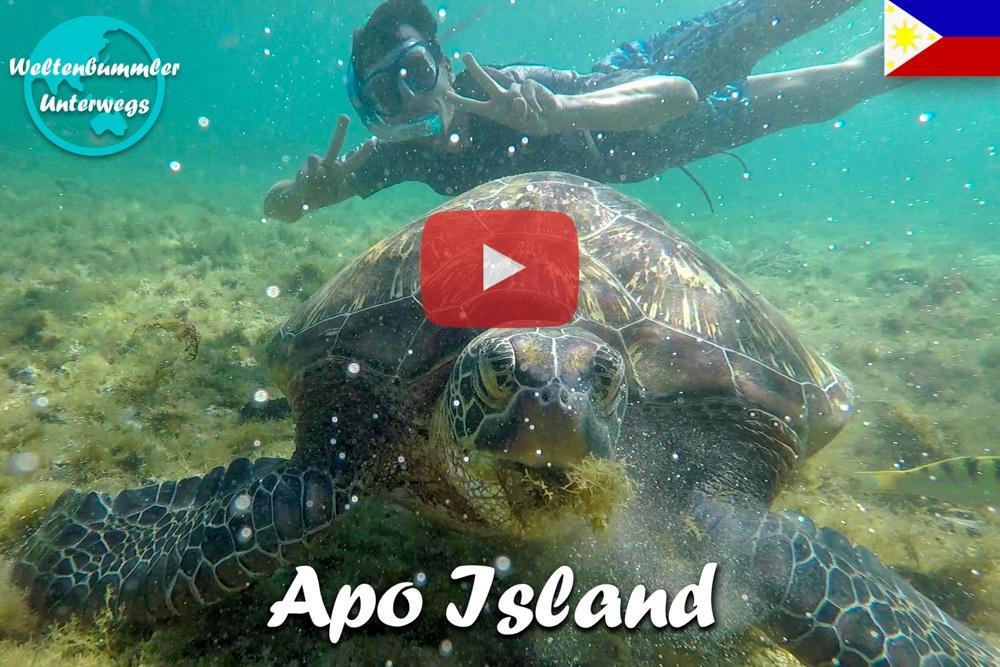 Apo Island ∙ Das Tauchparadies mit Riesenschildkröten und Seeschlangen ∙  Philippinen ∙ Weltreise Vlog #95