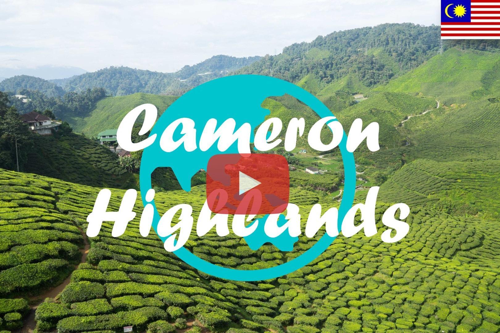 Weltreise Vlog #3 – Cameron Highlands: Zwischen Teeplantagen und Erdbeerfeldern
