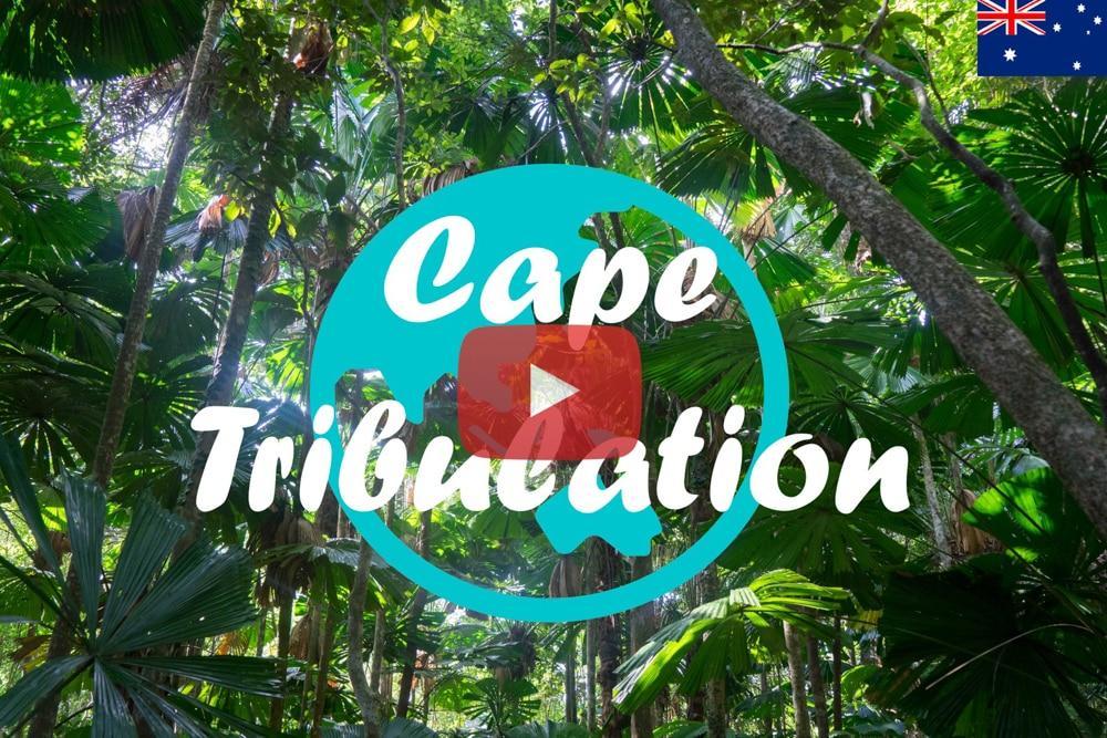 Weltreise Vlog #23: Daintree Nationalpark ∙ Der älteste Urwald der Welt