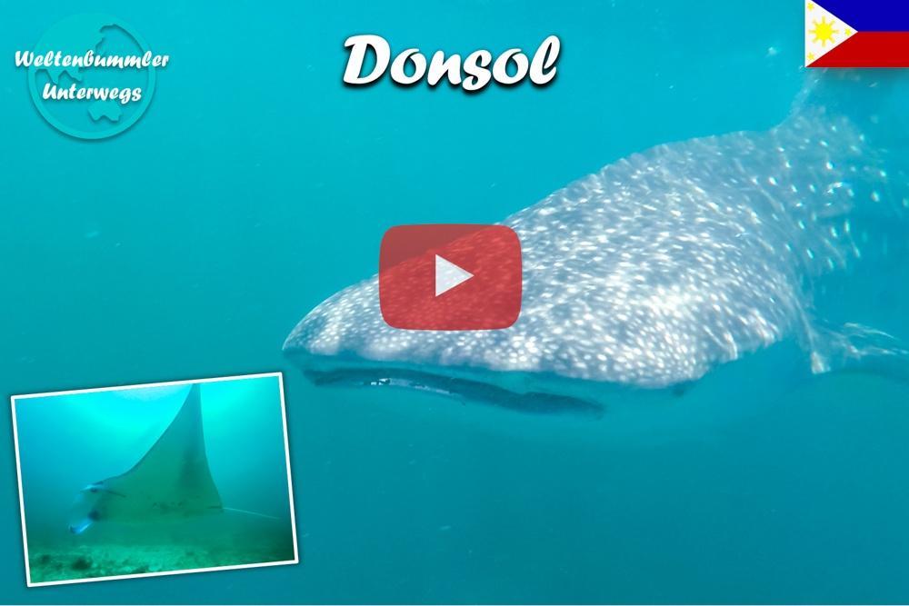 Donsol ∙ Tauchen mit den Walhaien und Mantarochen ∙ Weltreise Vlog #91