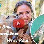 Weltreise Vlog #36: Süße Seelöwen und hungrige Kängurus an der Westküste