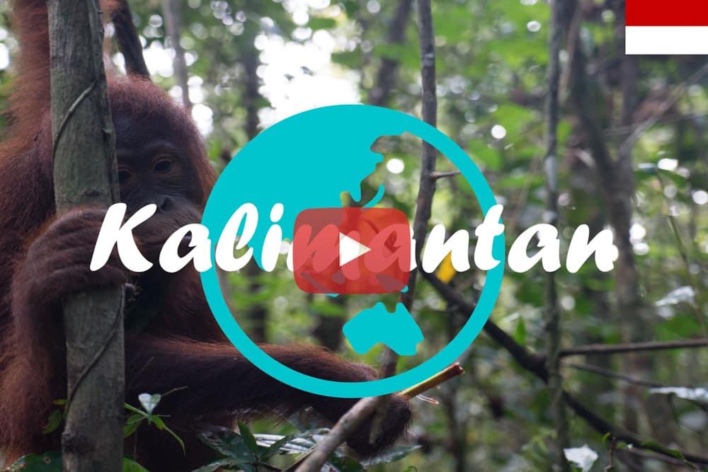 Weltreise Vlog #11 – Kalimantan – Mit Gips zu den Orang Utans