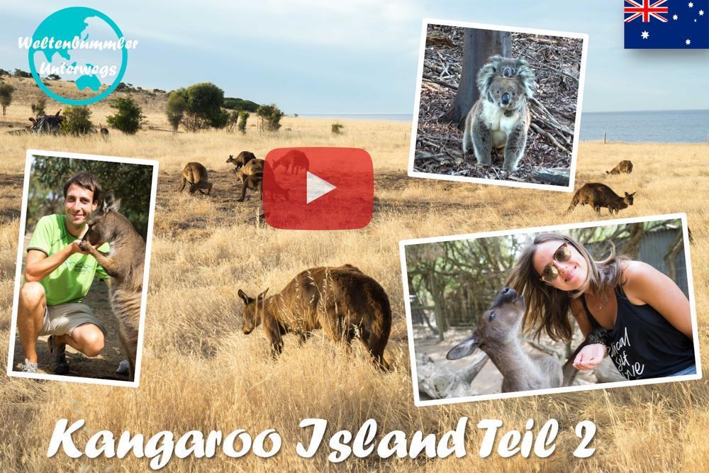 Weltreise Vlog #43: Kangaroo Island ∙ Und täglich grüßt das Känguru