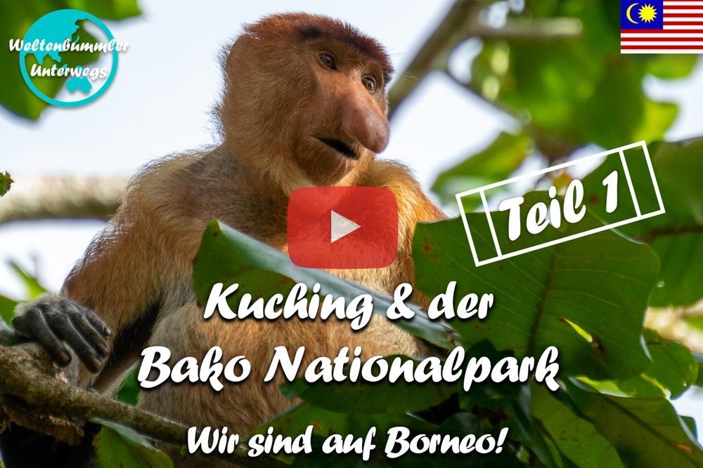 Kuching ∙ Nasenaffen im Bako Nationalpark ∙ Teil 1  ∙ Borneo ∙ Weltreise Vlog #103