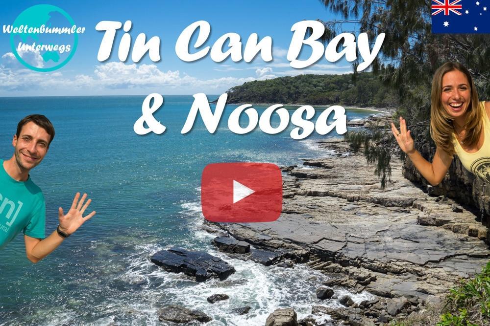 Weltreise Vlog #30: Tin Can Bay & Noosa ∙ Wir füttern Delfine! Wunderschöne Natur in Noosa!