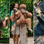 Sandakan & Sepilok ∙ Im Regenwald mit den Malaienbären und Orang-Utans ∙ Borneo