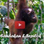 Sandakan & Sepilok ∙ Orang-Utans und die kleinsten Bären der Welt ∙ Borneo ∙ Weltreise Vlog #108