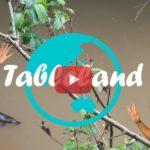 Weltreise Vlog #24: Tableland ∙ Schnabeltiere in freier Wildbahn
