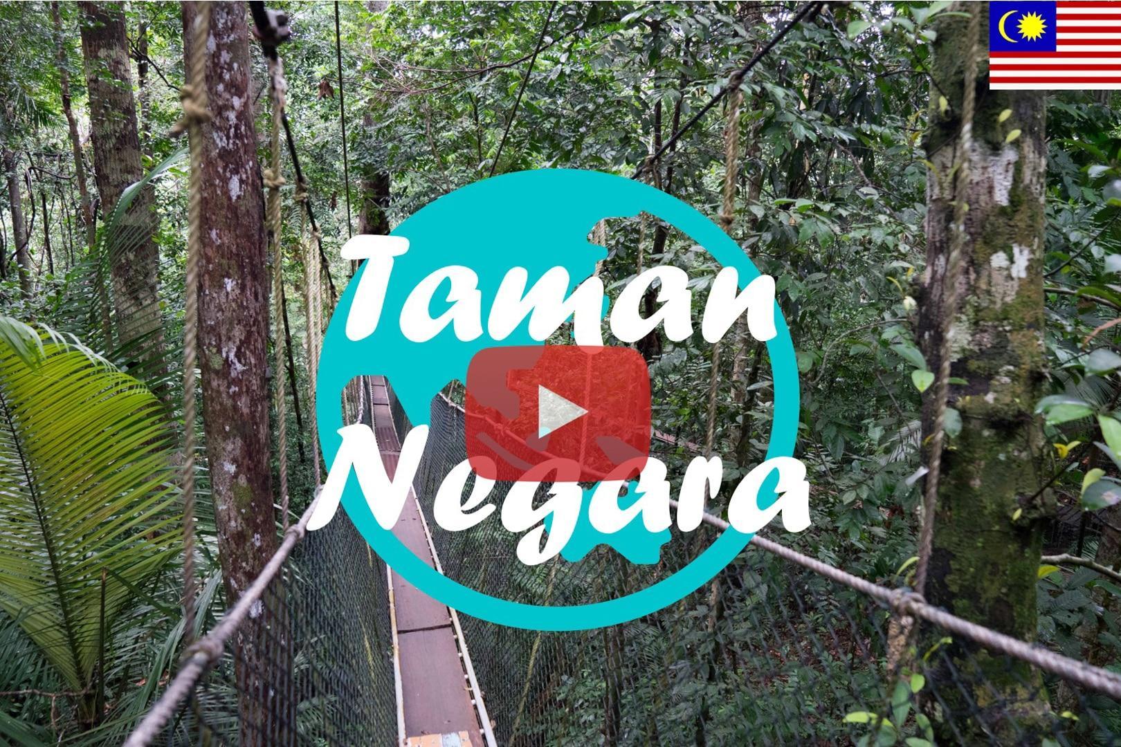 Weltreise Vlog #4 – Taman Negara: Abenteuer im Regenwald